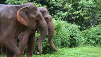 SFS-Cambodia: Ecology & Conservation of Southeast Asian Elephants