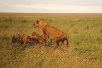 SFS-Tanzania: Wildlife Management